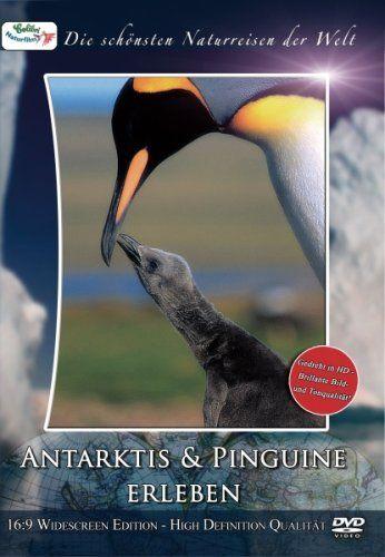 Antarktis & Pinguine erleben