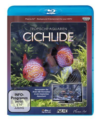 Tropische Aquarien - Cichlide HD
